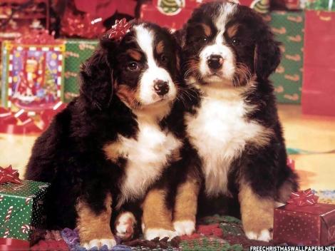 Best-Christmas-Friends-462742
