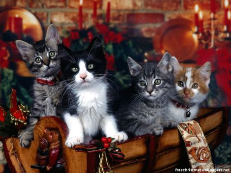 Christmas-Cat-02wallpapers-5112