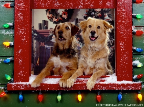 Christmas-dogs-watching-800-170801