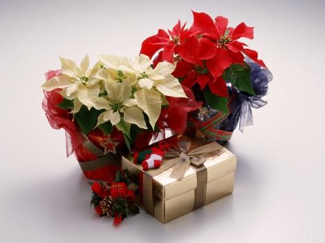 Christmas-Gifts-713517