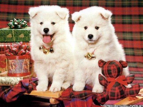 Christmas-Puppies-848998