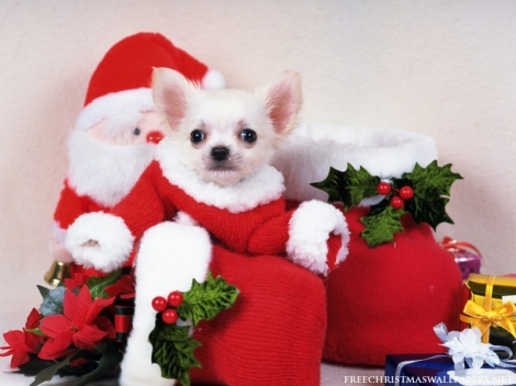 christmas-puppy-dog-800-596091