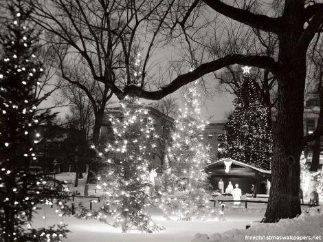 christmas-trees-12wallpaper-800-743889
