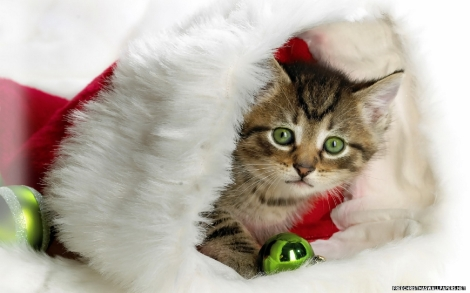 cute-christmas-kitty-464761