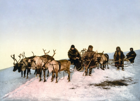 Traveling by reindeer ca. 1890-1900