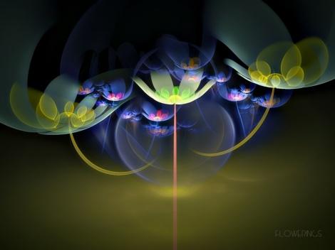 flores-1024x768