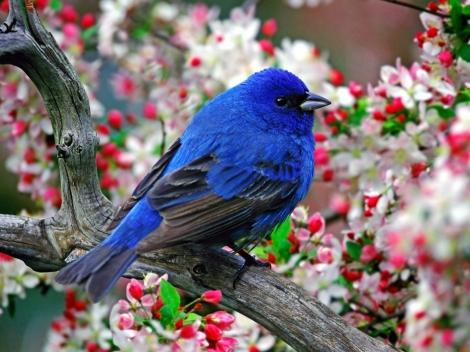 flowers_birds_indigo_bunting_1600x1200_wallpaper_Wallpaper_2560x1920_www.wallpaperswa.com