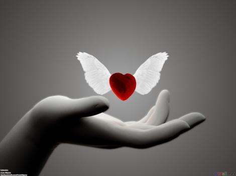 flying_heart_coração alado