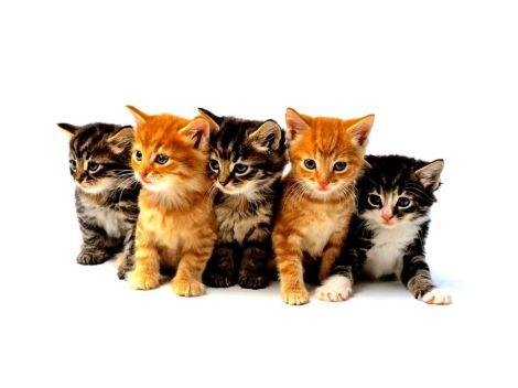 kittens-03
