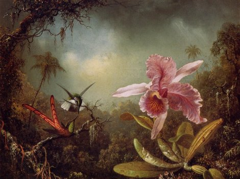 martin-johnson-heade-orchid-with-two-hummingbirds