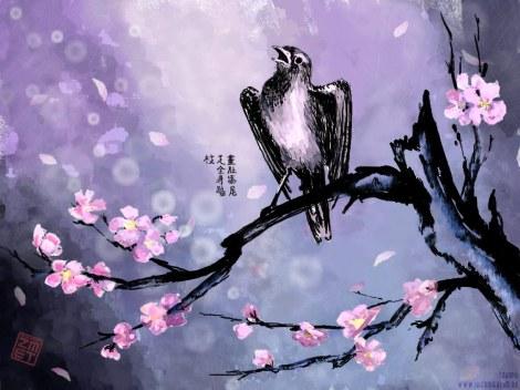sakura.bird