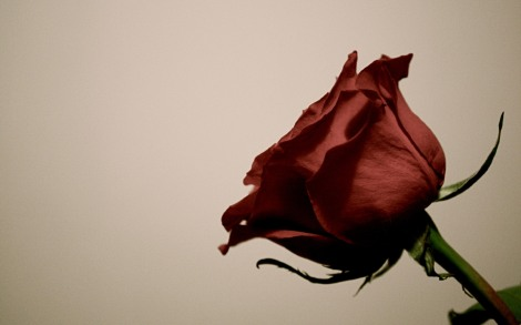 the-red-rose