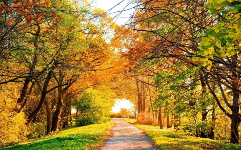10214-road-under-the-trees-1680x1050-nature-wallpaper