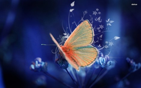11300-butterfly-1680x1050-animal-wallpaper