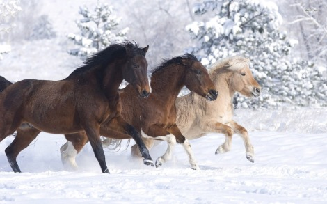 11307-horses-running-in-the-snow-1680x1050-animal-wallpaper