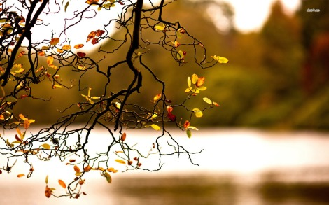 11788-autumn-branch-1680x1050-nature-wallpaper