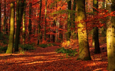 11789-autumn-forest-1680x1050-nature-wallpaper