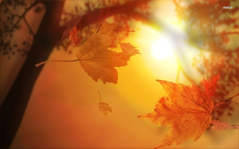 11868-falling-leaves-1680x1050-photography-wallpaper