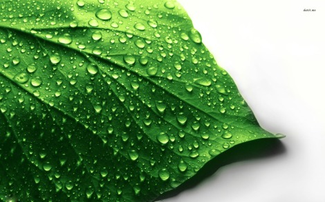 11924-water-drops-on-leaf-1680x1050-photography-wallpaper