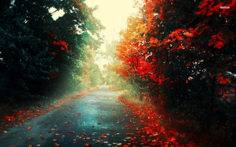 4349-road-through-the-woods-1680x1050-artistic-wallpaper