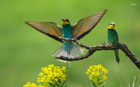 4857-green-birds-1680x1050-animal-wallpaper