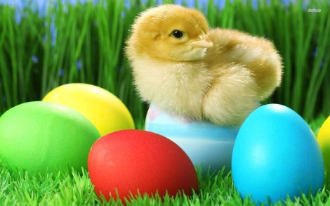 5332-chick-with-easter-eggs-1680x1050-holiday-wallpaper