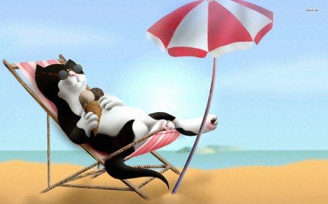 5430-kitten-on-the-beach-1680x1050-digital-art-wallpaper