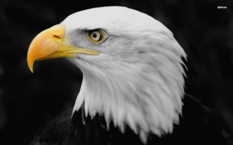 5607-bald-eagle-1680x1050-animal-wallpaper