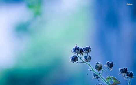 7323-rare-blue-flower-1680x1050-flower-wallpaper