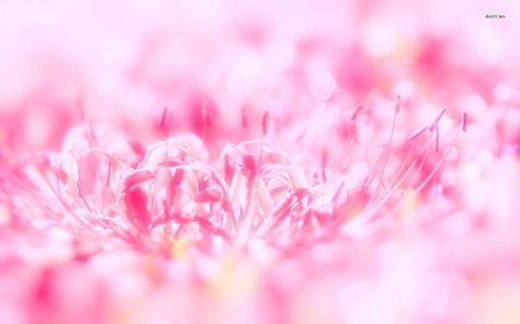 8854-pink-flower-1680x1050-flower-wallpaper