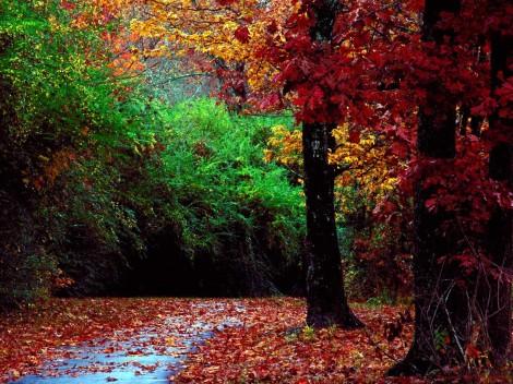 bosque-rojos-verdes3