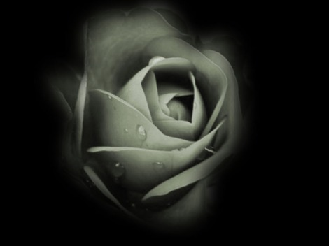 Dark_Rose_Wallpaper_q84fn