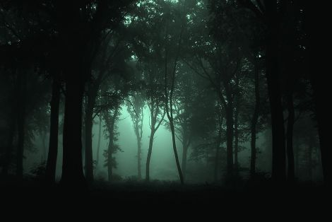 Gloomy_Forest
