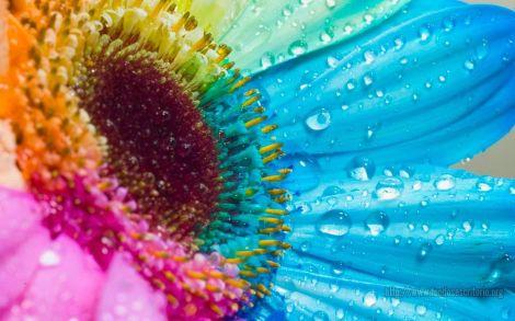 Image_040-691631