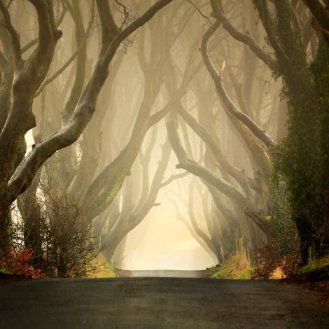 the-dark-hedges-2011-pawel-klarecki