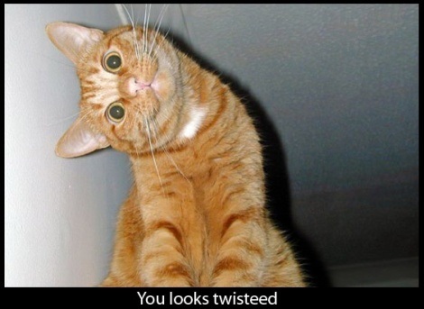 twisted.cat