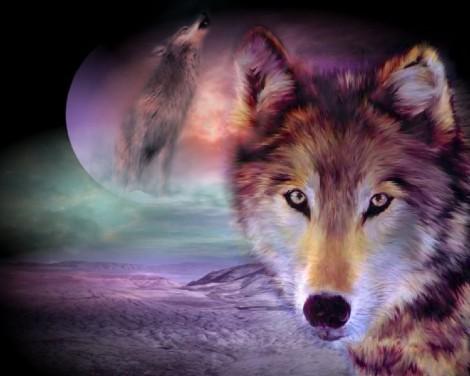 Wolf%20Night